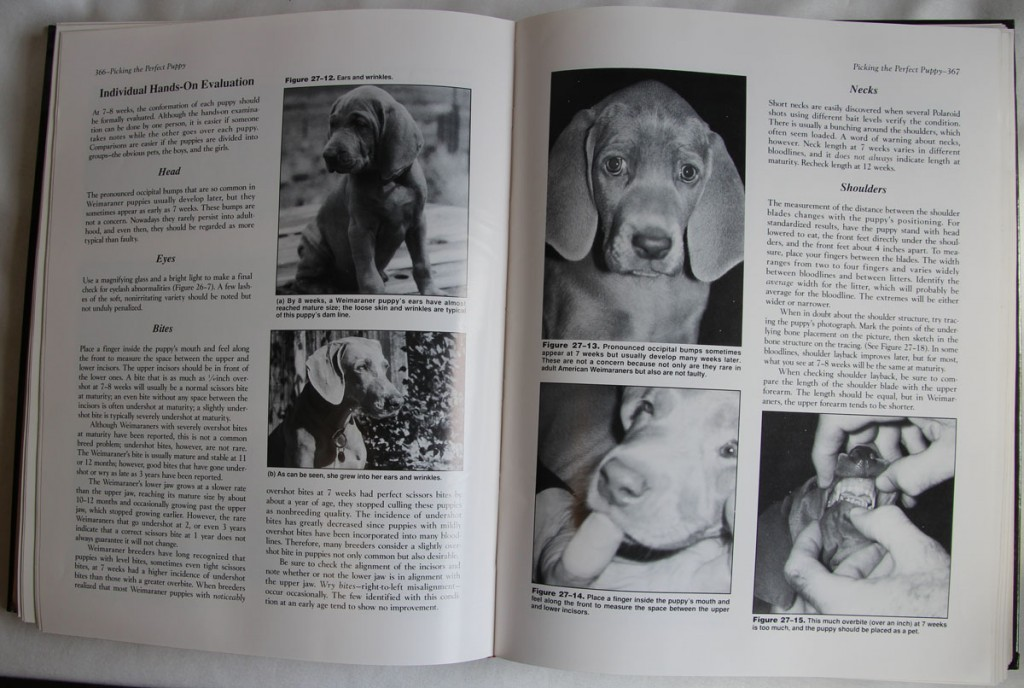 Weimaraner Ways Book Sample Pages