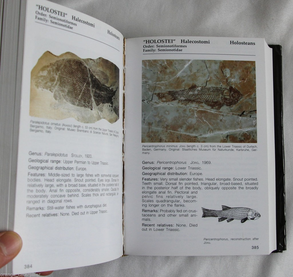 A look inside this book. These pages show fossils of Holostei Halecostomi - Holosteans